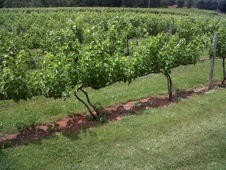 Visit Nearby Vineyards on the Blue Ridge Whiskey Wine Loop