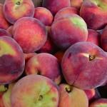 Local Williams Orchard Peaches