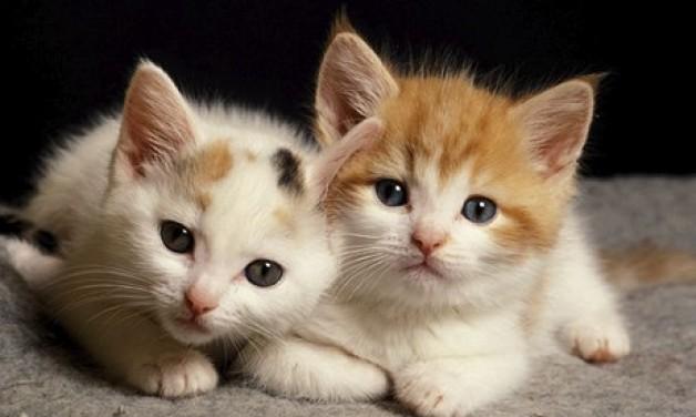 Rappcats Fundraiser